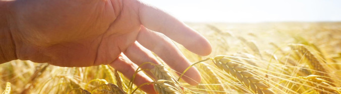 Can harvest and good decision making coexist?